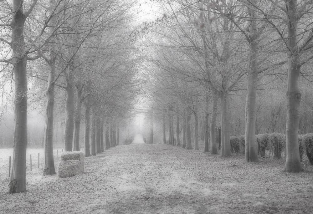 abandoned-lane